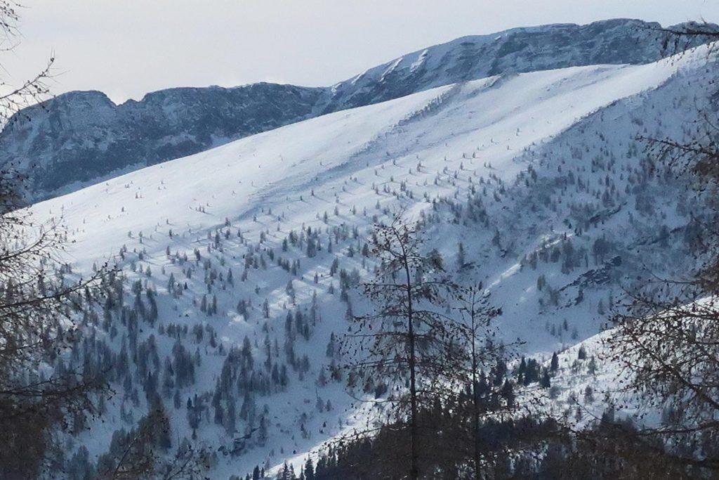 Das Bild zeigt die Skitour Bartelmann, den genialen Nordhang mit dem lichten Lerchenwald.
